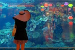 Trong Dubai Mall có bể thủy sinh Dubai Aquarium khổng lồ chứa 10 triệu lít nước.